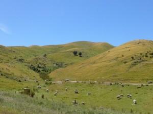 起伏のある牧場