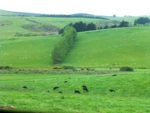 ゴア付近の牧場