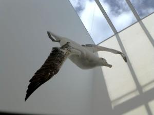 館内を飛ぶアルバトロス