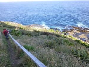 NZアシカの生息地へ