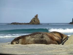 砂浜で悠然とお昼寝中
