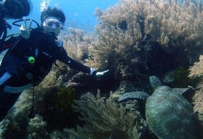 サンゴ礁で仮眠中のアオウミガメ