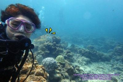 コブシメ、どこにいるかわかりますか?