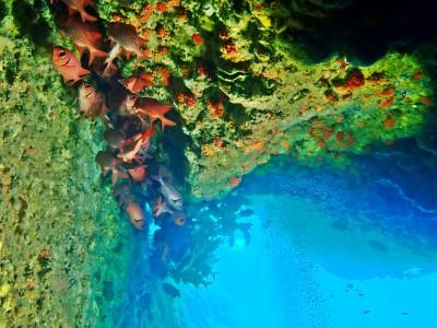 アカマツカサが群れる洞窟