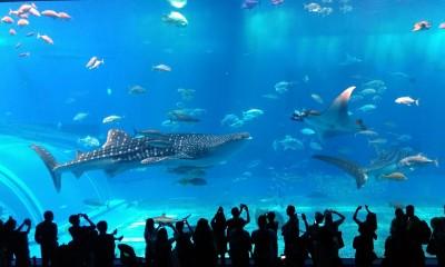 美ら海水族館 黒潮の海大水槽